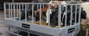 homepage third slide cows eating