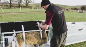 sheep systems