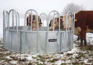 Cattle Feeding Rings