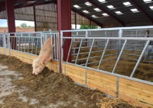 cattle feed fence