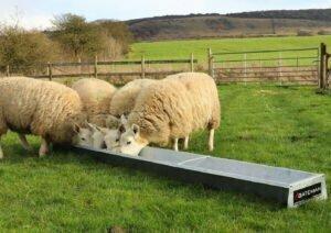 floor feeding sheep trough