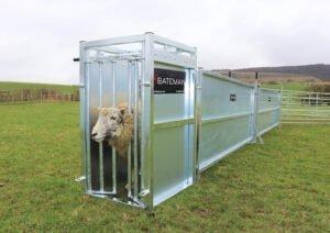 stand-in-sheep-bath