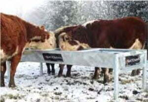 troughs and barley feeders cat image