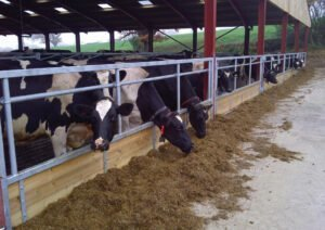 Bespoke Feeding Systems horizontal rail cattle