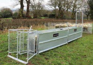 sheep handling starter