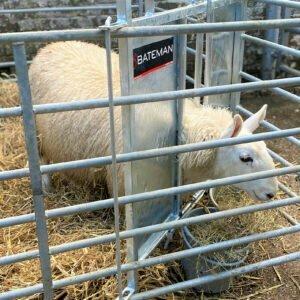 hero lamb adopter hurdle